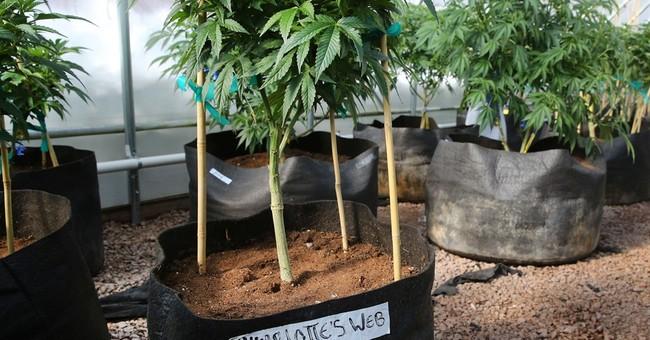 Correction: Marijuana Research story