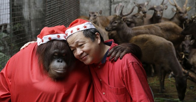 Image of Asia: Manila zoo gets in Christmas mood