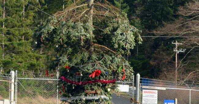 Broken treetop hanging on wire gets holiday decor