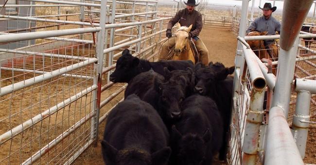 Texas ranchers seeking alternative incomes