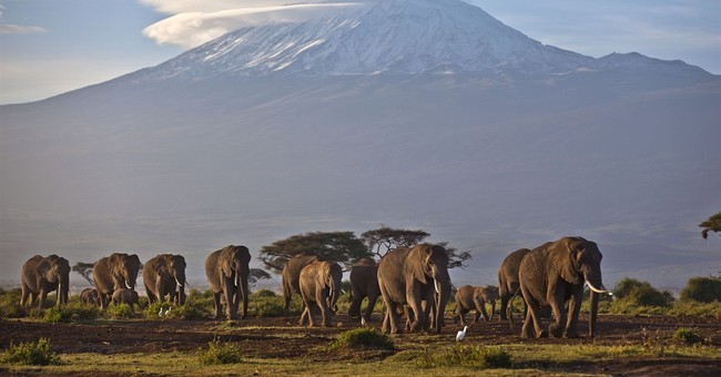 Interpol: Kenyan suspected ivory smuggler arrested