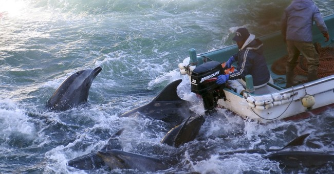 Celebrities want to tie trade pact to dolphin hunt