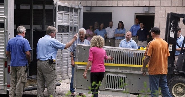 5 exotic animals that survived Ohio release moved