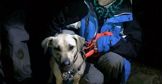 Dog not gone: Rescue in the Columbia Gorge