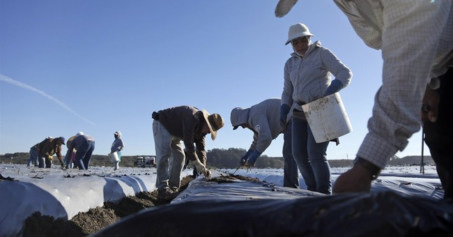 Farmers brace for labor shortage under new policy
