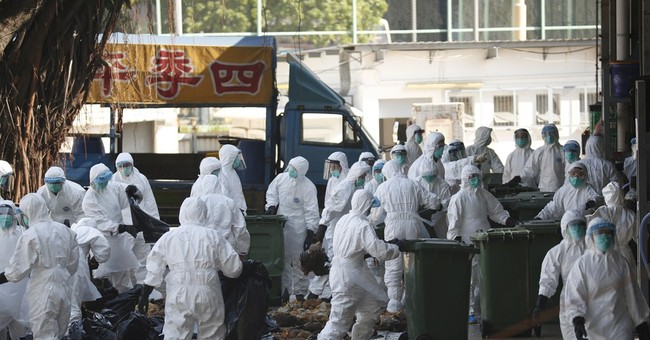 Hong Kong destroys poultry from China after bird flu found