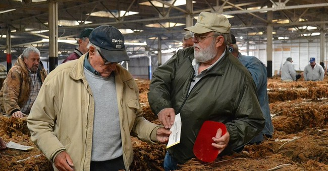 Tobacco auction system is all but snuffed out