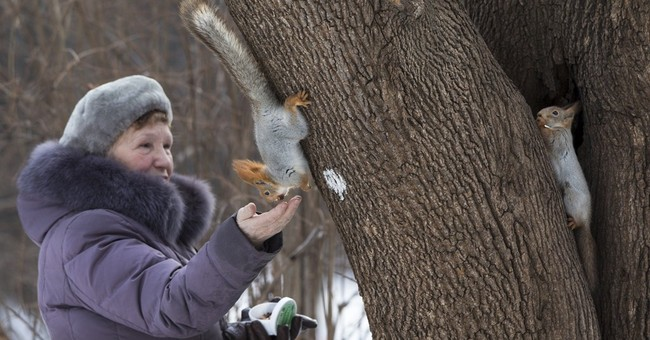 Squirrels nabbed from Moscow's parks, sold as pets