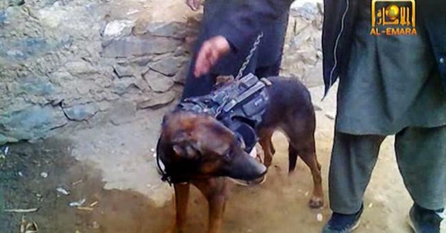 Afghan Taliban say they captured NATO military dog
