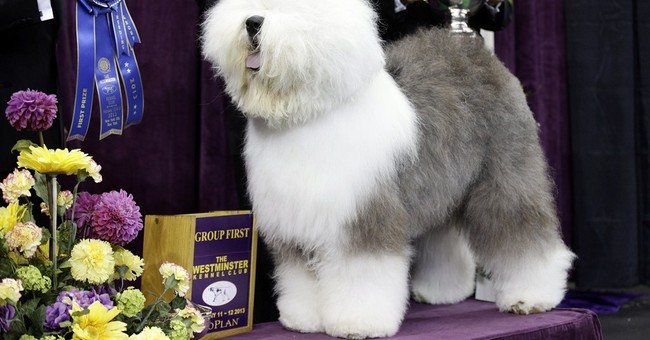 5 things to know about the Westminster dog show