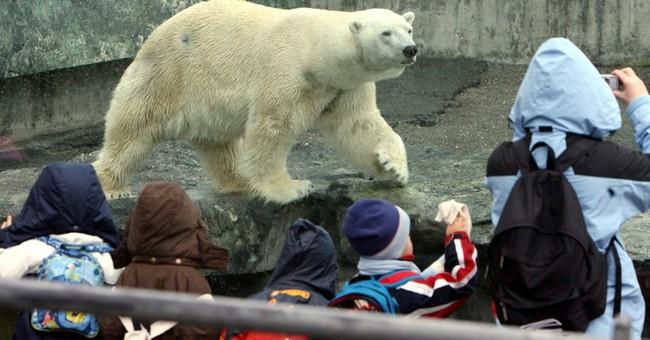 German zoo's polar bear swallows jacket, dies