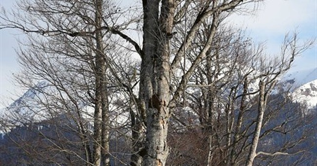 SOCHI SCENE: Tree Climbing