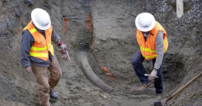 Mammoth tusk may be largest found in Seattle area