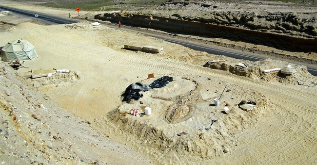 Chile: fossil whales in desert mystery solved