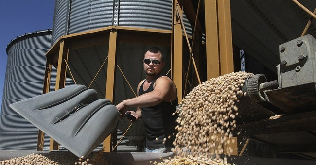 Hummus drives chickpea growth; farmers benefit