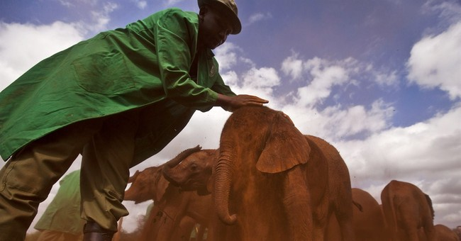 1st Wildlife Day marks elephant, rhino deaths