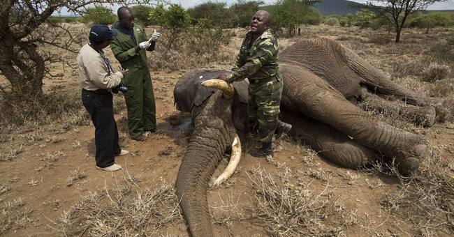 1st Wildlife Day marks elephant, rhino deaths