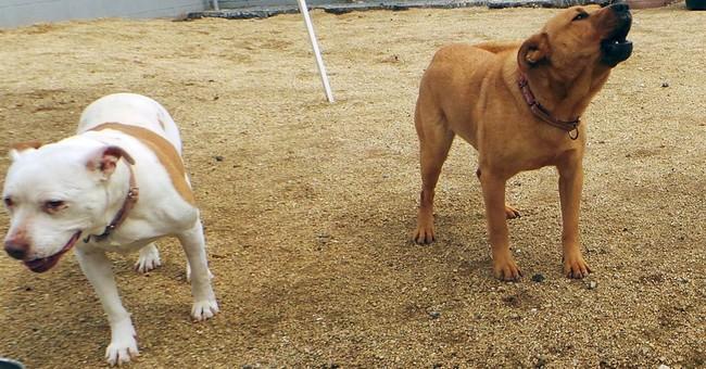 Barking can bite at relationships among neighbors