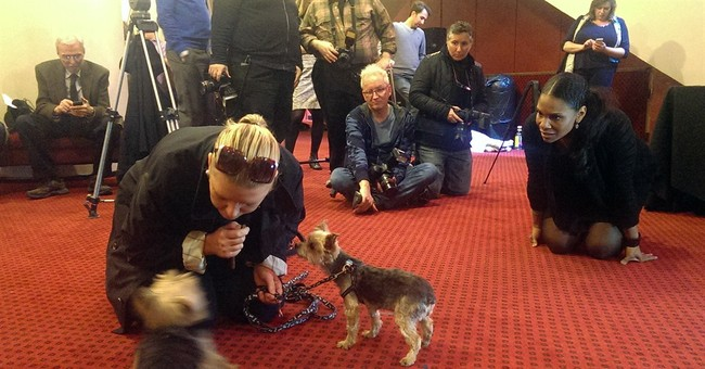 Pooches put best paw forward for Broadway role
