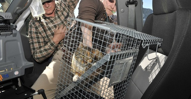 Cat rescued after 3 days atop pole