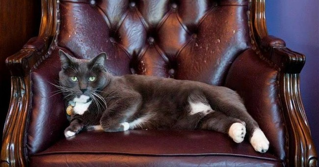 Search on for missing Colorado hotel cat