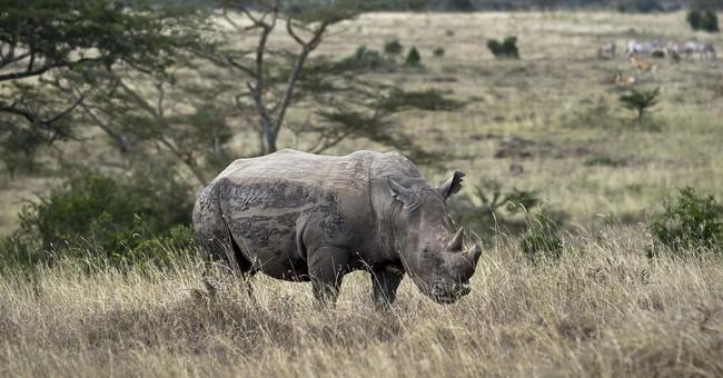Cartel inside Kenya fueling rhino, poaching deaths