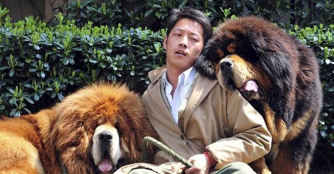 Chinese breeder sells 2 Tibetan mastiffs for $3M