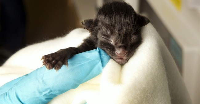 Most wild kittens taken to shelters will be killed