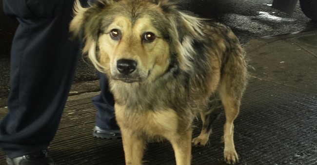 Dog rescued from tracks after racing train in NYC