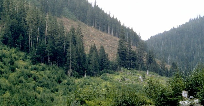 Foreign Exploitation of America's Largest Forest Is This Campaign Season's Sleeper-issue