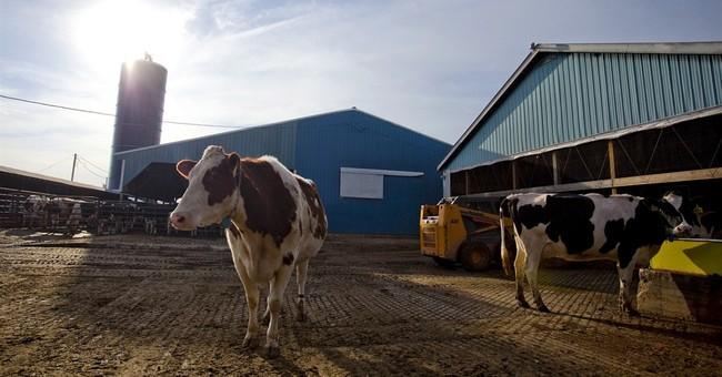 The Farm Bill Leaves a Sour Taste