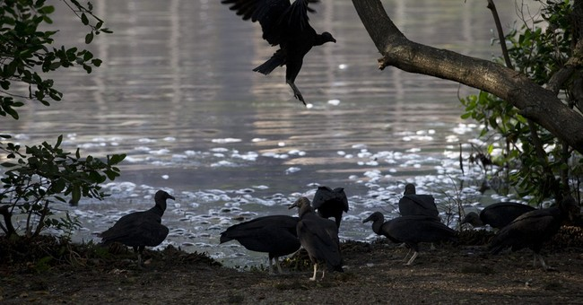 Fish die-off hits Olympic lake in Rio
