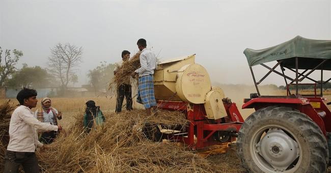 Unseasonal rain causes heartache for many Indian farmers