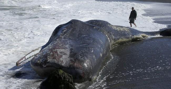 Experts remove whale carcass near San Francisco