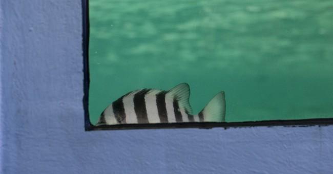 Fish found in suspected tsunami debris boat quarantined