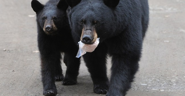 Intervention by Alaska governor spares lives of bears