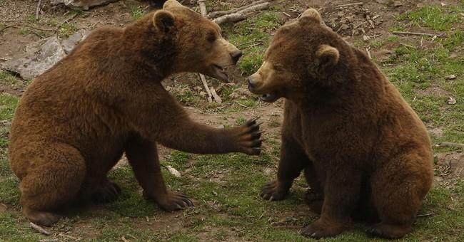 A bear hug: Croat village shelters bears as good neighbors