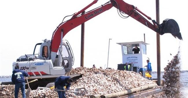Environmentalists re-establishing Barnegat Bay oyster colony