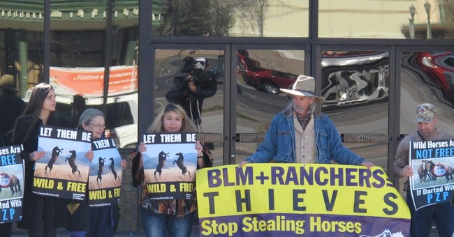 Wild horse advocates disagree on contraceptives for mustangs