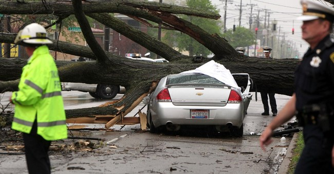 Tree that killed Ohio driver marked for eventual removal