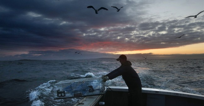 Winter lobsters could bolster fishery during shrimp shutdown