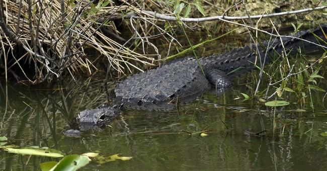 Obama sounds alarm on climate damage in visit to Everglades