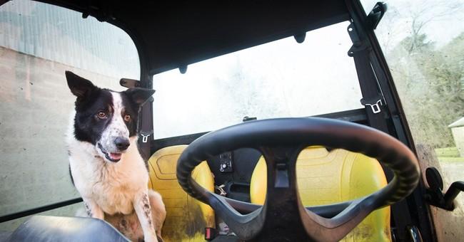 Scottish collie behind wheel of runaway vehicle causes scare