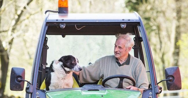 Scottish collie behind wheel of runaway vehicle causes scare