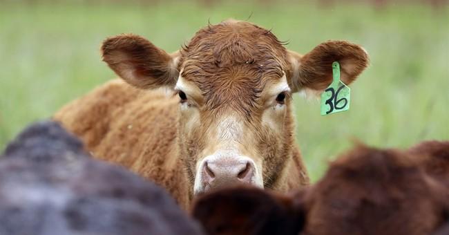 Bill under debate would limit farm antibiotics in Oregon