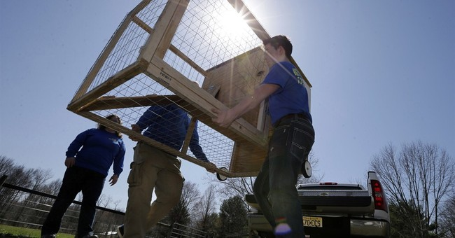 Entrepreneurs hatch hen-rental idea for fans of fresh eggs