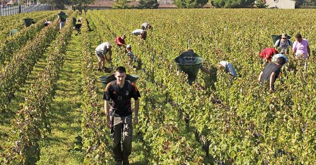 China now has more vineyard land than France