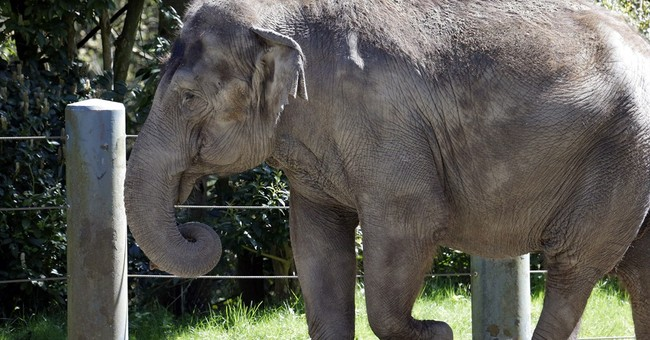 Popular zoo elephants likely to get harder to see in future