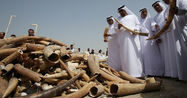 UAE crushes tons of contraband ivory in anti-poaching action
