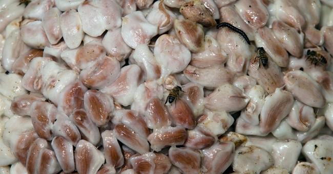 Export freeze sows bitterness in Venezuela chocolate trade